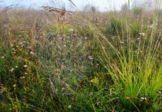 Free Misty Morning Dew On Mountain Meadow Stock Images - 107138614