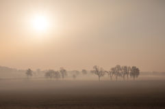 Misty morning with direct sunrise Royalty Free Stock Photography