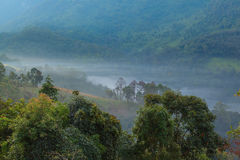 Misty in the morning at Doi Luang Stock Photography