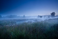Misty morning dusk over swamp Stock Photo
