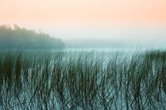 Misty Morning em um lago imagem de stock royalty free