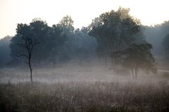 Misty Morning en el parque nacional la India de Kanha Fotos de archivo