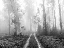 Misty Morning en las montañas fotos de archivo