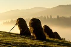 Misty Morning en las montañas Imagenes de archivo