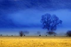 Misty Morning en valle con los árboles y los animales del ganado Foto de archivo libre de regalías