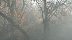 Misty Morning in Fall. Trees penetrate the morning`s mist as sunbeams pierce through Stock Photography