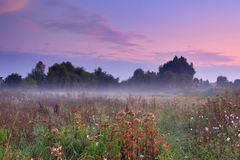 Misty morning on the field Stock Image