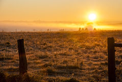 Misty morning Royalty Free Stock Photo