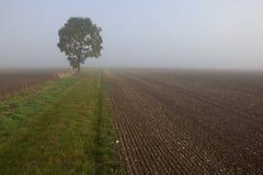 Misty morning fields Stock Photography