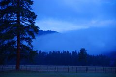 Misty morning with firs and aspens royalty free stock photography