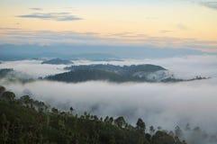 Misty morning fog nature landscape, Sri Lanka. Misty morning fog nature landscape of tea plantations with an island of trees in Haputale, Sri Lanka Royalty Free Stock Photography