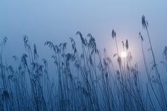 Misty Morning Fog Rotmoos Royalty Free Stock Photo