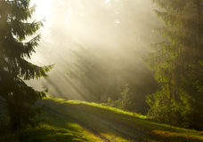 Misty morning in the forest Stock Images