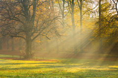 Misty Morning in Forest Royalty Free Stock Photo