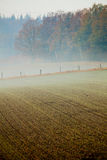 Misty Morning in Forest Royalty Free Stock Images
