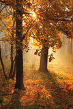 Misty morning in forest stock image