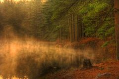 Misty Morning Forest Lake. Early morning mist rises from an Evergreen forest lake royalty free stock photography
