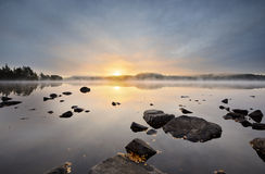 Misty morning. In a forest lake Royalty Free Stock Images