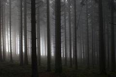 Misty morning forest Stock Photography