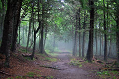 Misty morning in fundy. Hiking in fundy national park Royalty Free Stock Photography