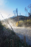 Misty Morning Gila River. View of a spider web alongside an early morning misty Gila River in the Gila Wilderness of New Mexico Stock Photos