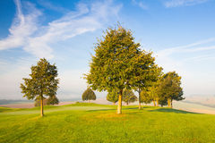 Misty morning on a golf course Stock Photo