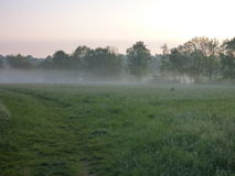Misty morning in a grass walley. A misty morning in a grass walley Royalty Free Stock Photos