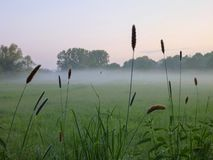 Misty morning in a grass walley. A misty morning in a grass walley Royalty Free Stock Photography