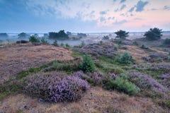 Misty morning on heatherland Royalty Free Stock Image
