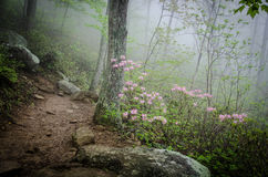 Misty Morning Hike. The fog was thick at the foot of Old Rag Mountain, in Virginia, but it added to the beauty of the landscape, giving it an almost dream-like Royalty Free Stock Photos