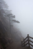 Misty morning in the Huangshan Mountain (Yellow Mountain), China Royalty Free Stock Photos