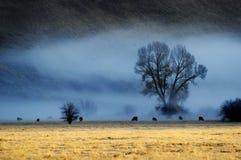 Misty Morning im Tal mit Bäumen und Vieh-Tieren lizenzfreies stockfoto