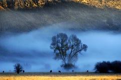 Misty Morning im Tal mit Bäumen und Vieh-Tieren lizenzfreies stockbild