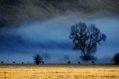 Misty Morning im Tal mit Bäumen und Vieh-Tieren in der Landschaft lizenzfreie stockfotos
