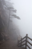 Misty Morning In The Huangshan Mountain (Yellow Mountain), China Stock Images