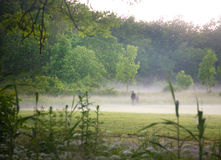 Misty Morning In The Park Royalty Free Stock Images