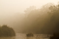 Misty morning in jungle river in Nepal Royalty Free Stock Images