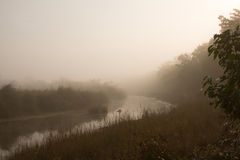 Misty morning in jungle river in Nepal Stock Photos