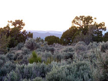 Misty Morning. Juniper trees and sage bushes with a misty mountain backdrop Stock Photography