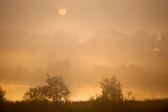 Misty morning lake Royalty Free Stock Photo