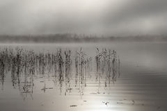Misty morning by the lake.  Stock Images