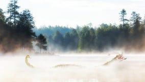 Misty Morning Lake bij Zonsopgang Royalty-vrije Stock Fotografie