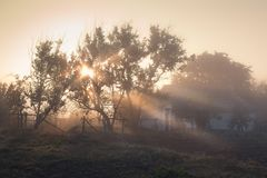 A misty morning by the lake. Silhouette of trees with sun beams. royalty free stock photo