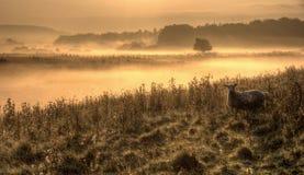 Misty Morning-landbouwgrond Stock Foto's