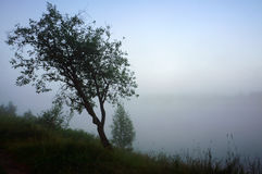 Misty morning landscape with lonely tree in fog on river Royalty Free Stock Photo