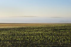 Misty morning landscape in Poland Royalty Free Stock Photo