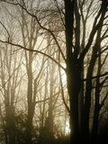 Misty Morning Light. A view of bare trees lit by morning light shone through a misty fog royalty free stock image
