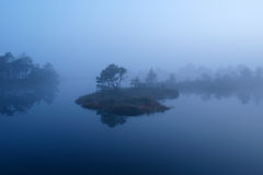 Misty morning in marsh Royalty Free Stock Images