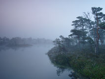 Misty morning in marsh Stock Photos