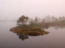 Misty morning in marsh Stock Image